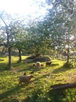 Streuobstbäume pflanzen – Theorie & Praxis