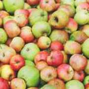 Obstbaumschnitt an Hochstämmen